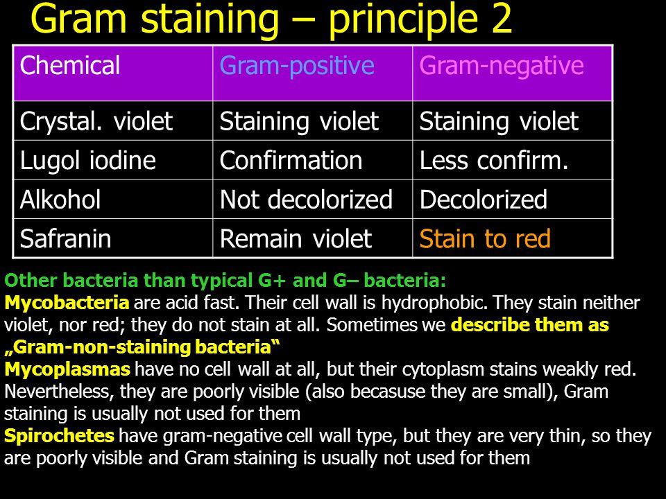 Gram staining – principle 2
