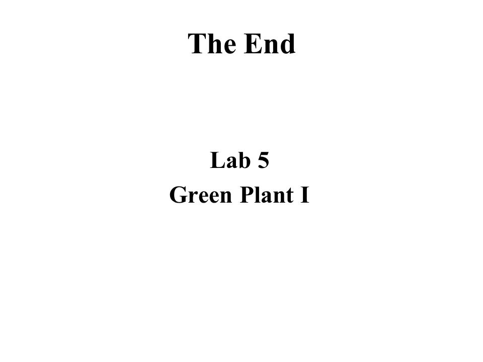 The End Lab 5 Green Plant I
