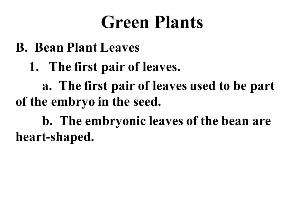 Green Plants B. Bean Plant Leaves 1. The first pair of leaves.
