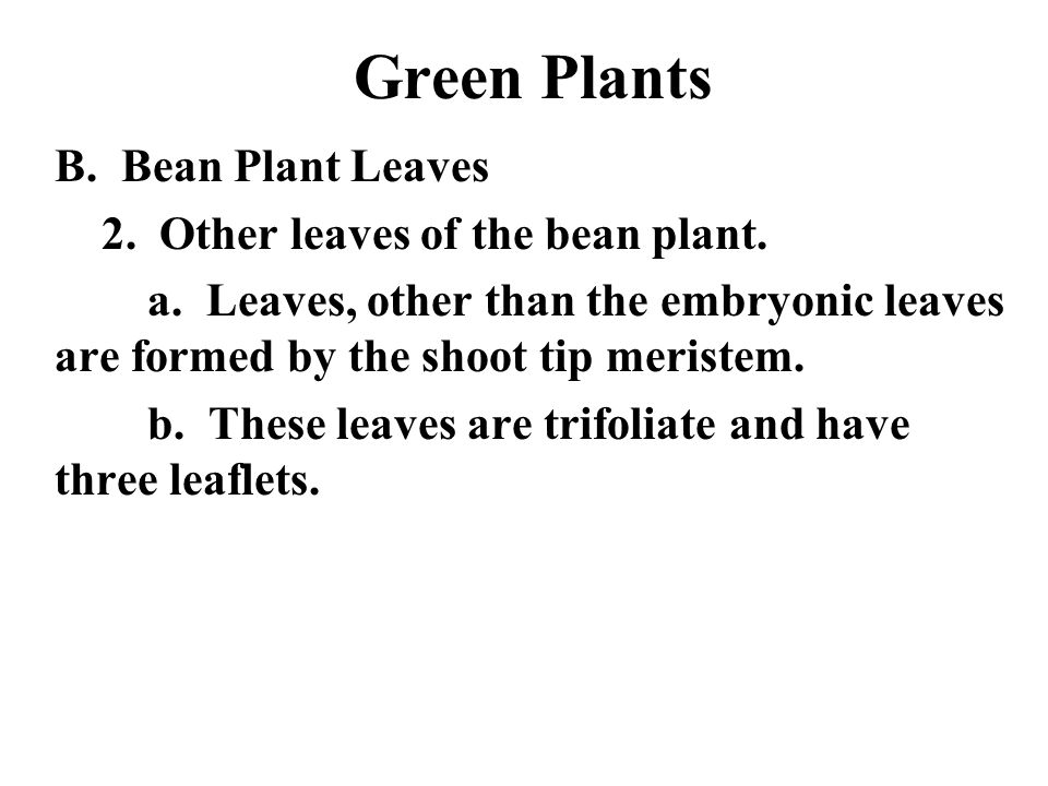 Green Plants B. Bean Plant Leaves 2. Other leaves of the bean plant.