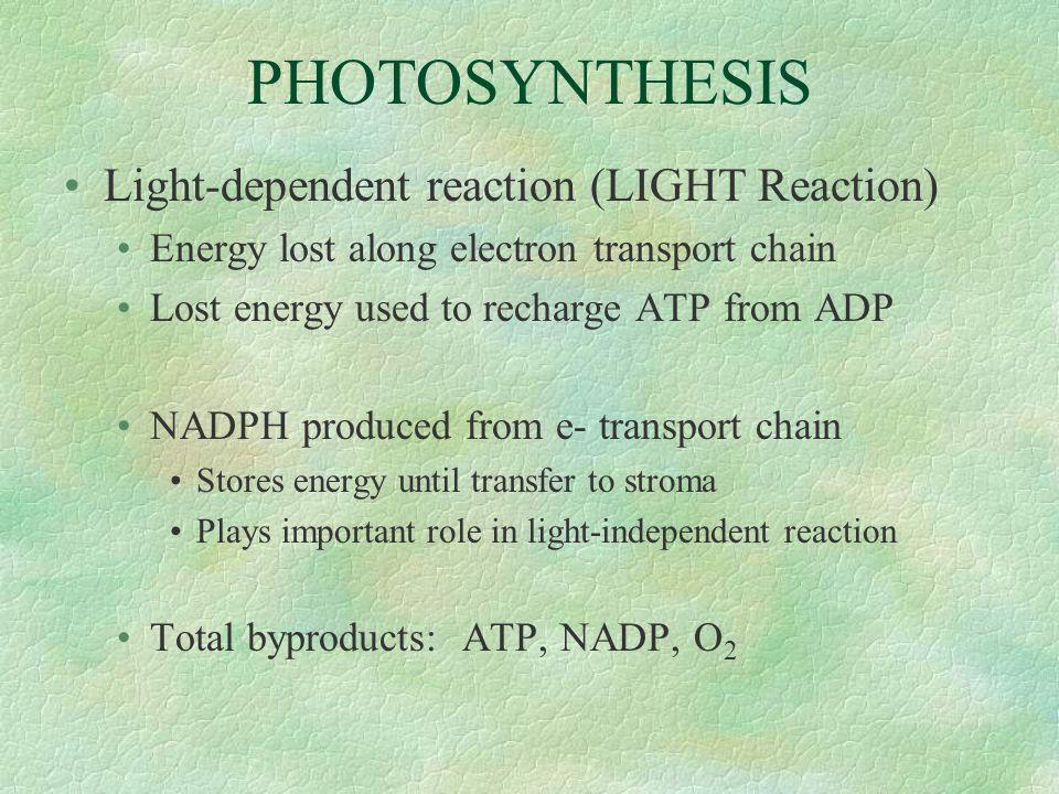 PHOTOSYNTHESIS Light-dependent reaction (LIGHT Reaction)