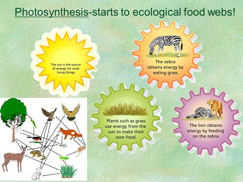 Photosynthesis-starts to ecological food webs!
