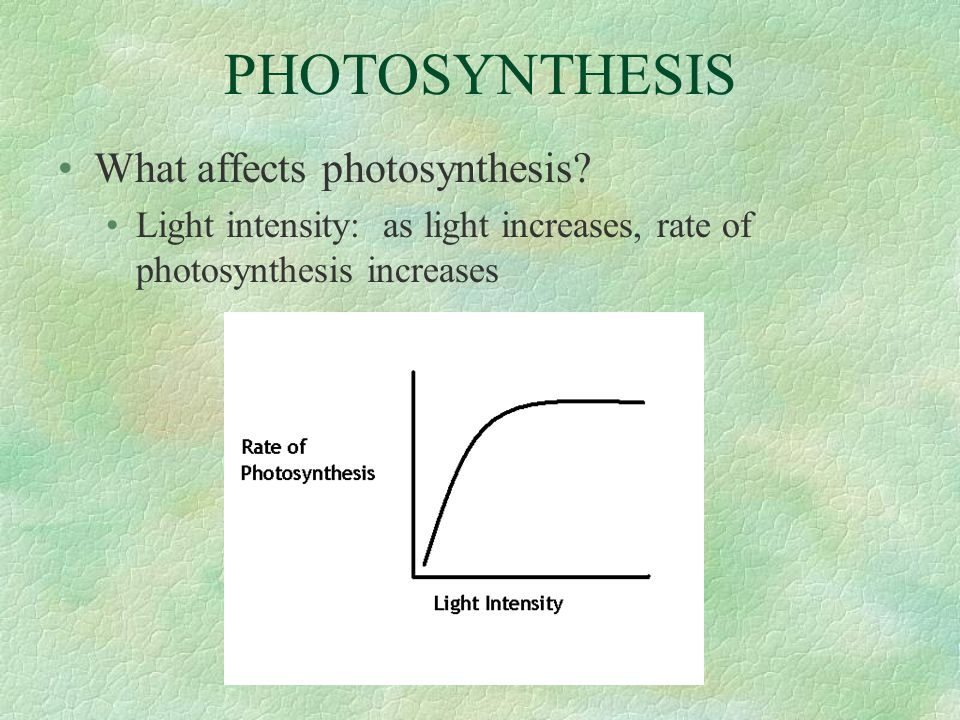 PHOTOSYNTHESIS What affects photosynthesis