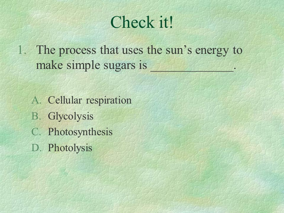 Check it! The process that uses the sun's energy to make simple sugars is _____________. Cellular respiration.