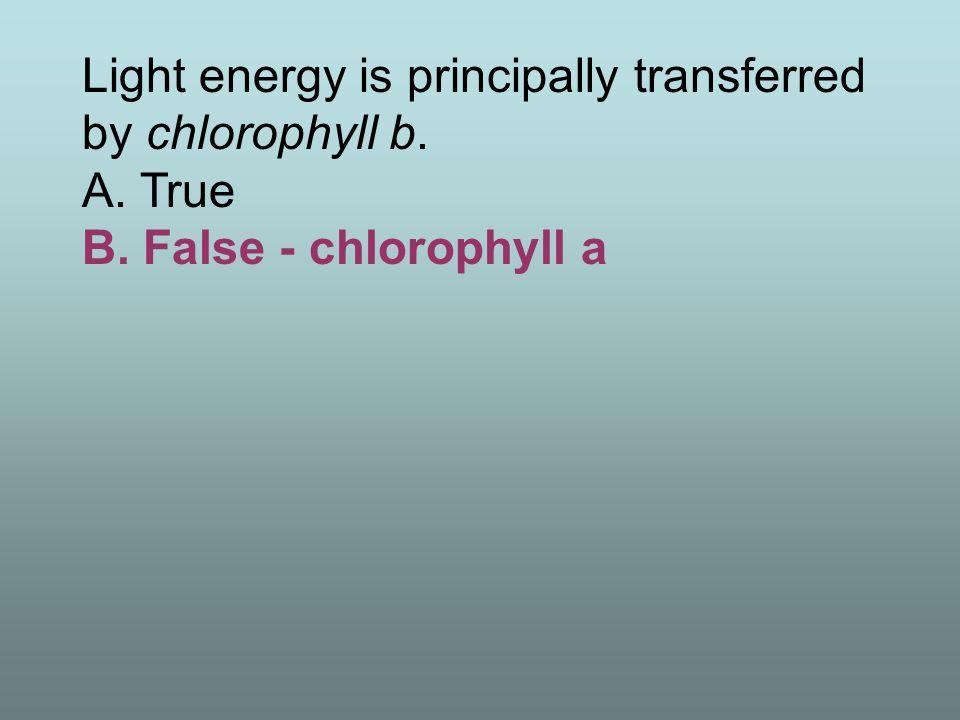 Light energy is principally transferred by chlorophyll b. A. True B