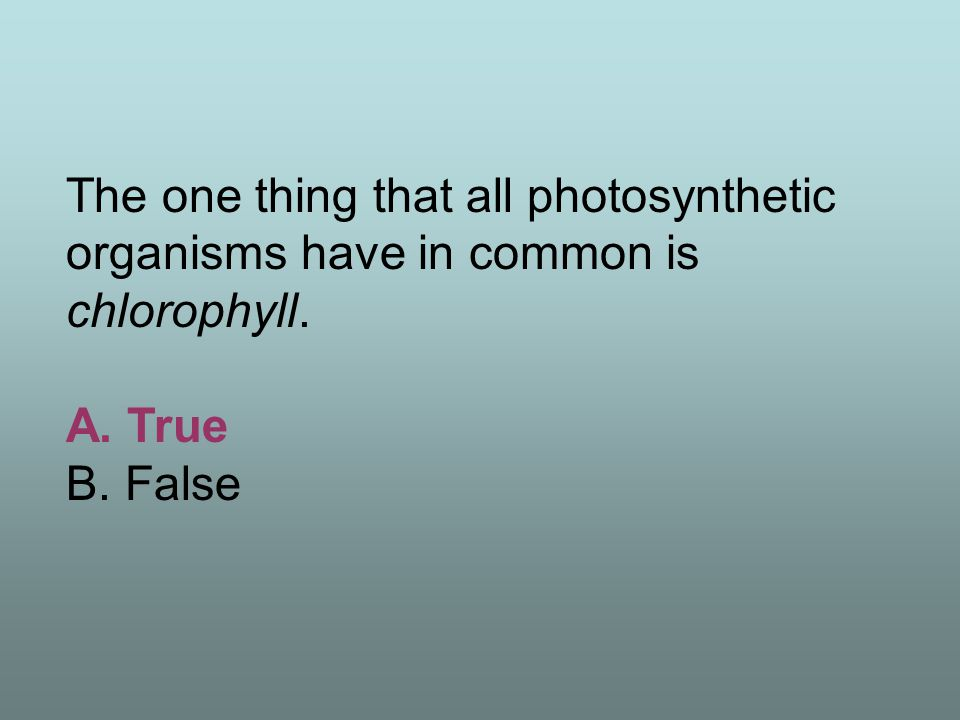 The one thing that all photosynthetic organisms have in common is chlorophyll.