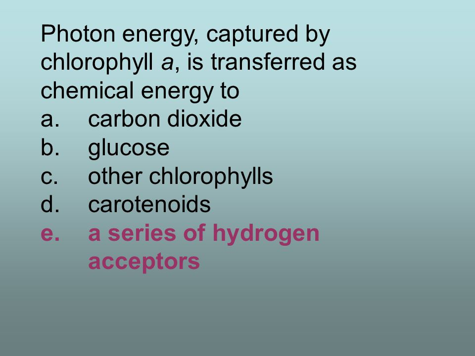 Photon energy, captured by chlorophyll a, is transferred as chemical energy to