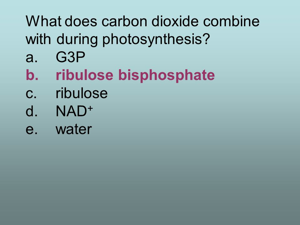 What does carbon dioxide combine with during photosynthesis