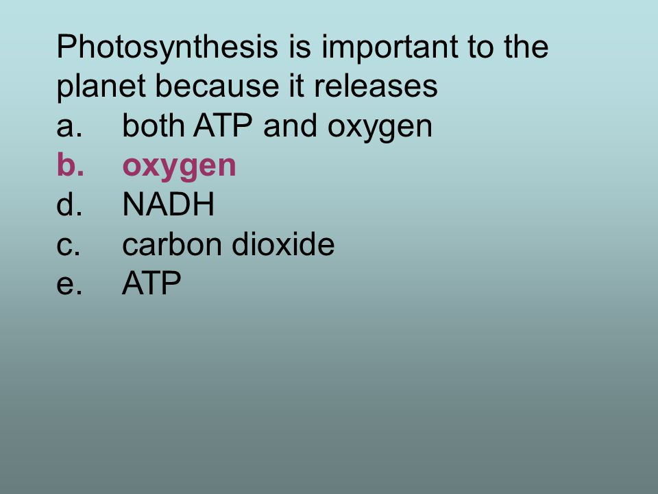 Photosynthesis is important to the planet because it releases