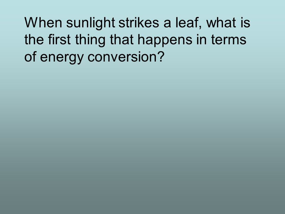 When sunlight strikes a leaf, what is the first thing that happens in terms of energy conversion