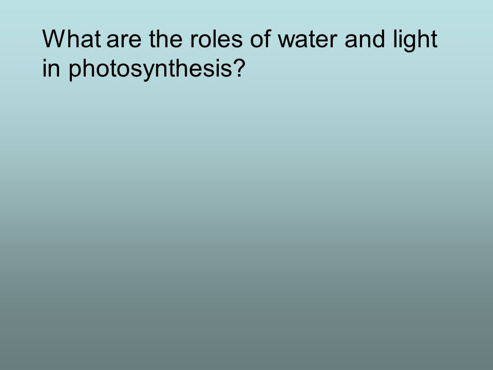 What are the roles of water and light in photosynthesis