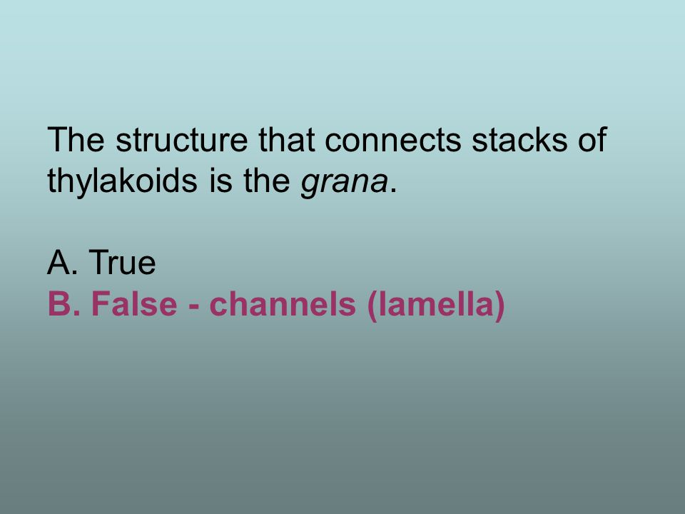 The structure that connects stacks of thylakoids is the grana.