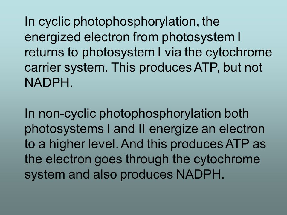 In cyclic photophosphorylation, the energized electron from photosystem I returns to photosystem I via the cytochrome carrier system. This produces ATP, but not NADPH.