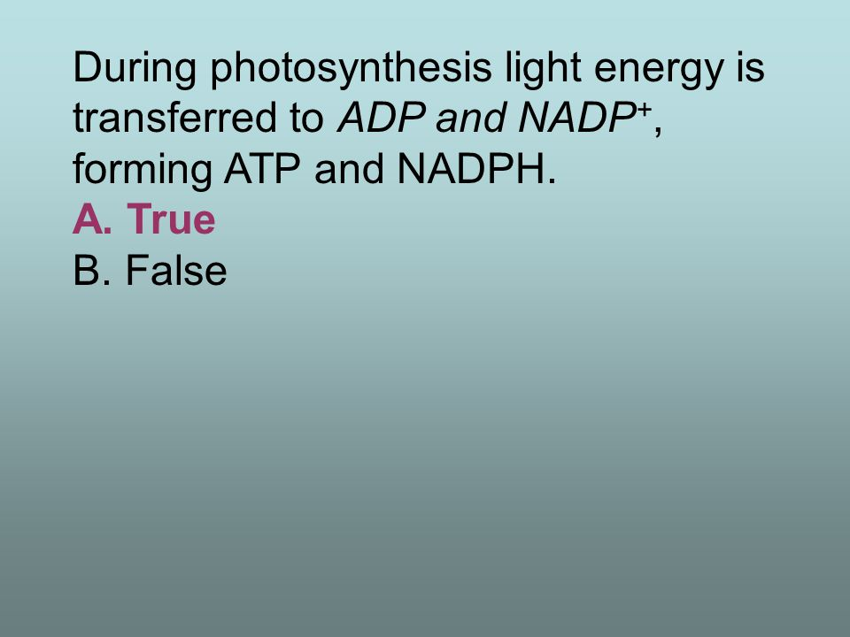 During photosynthesis light energy is transferred to ADP and NADP+, forming ATP and NADPH.