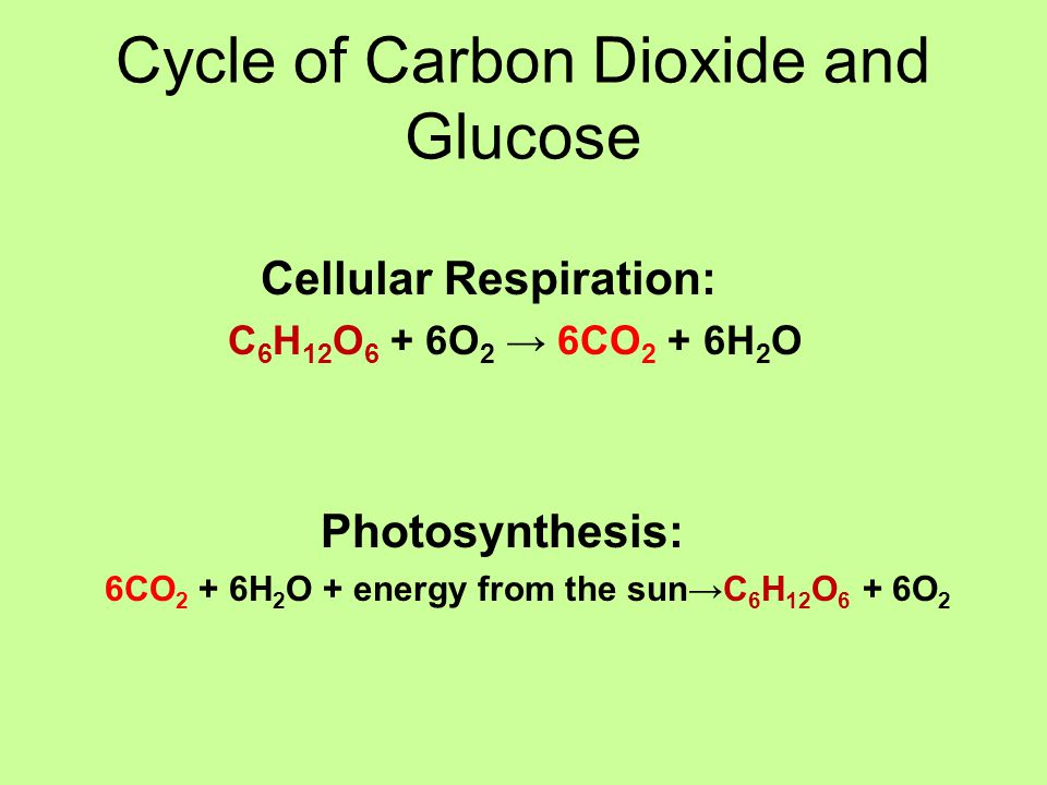 Cycle of Carbon Dioxide and Glucose