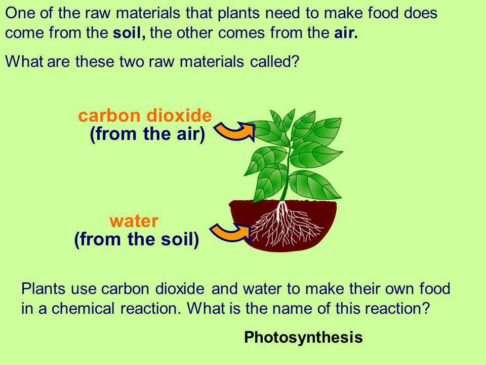 Plants and Photosynthesis - ppt download