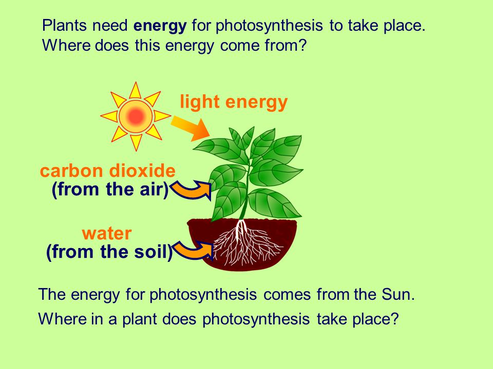 light energy carbon dioxide (from the air) water (from the soil)
