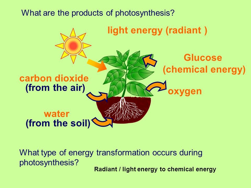 in photosythesis Photosynthesis, generally, is the synthesis of sugar from light, carbon dioxide and water, with oxygen as a waste product it is arguably the most important biochemical pathway known nearly all life depends on it.