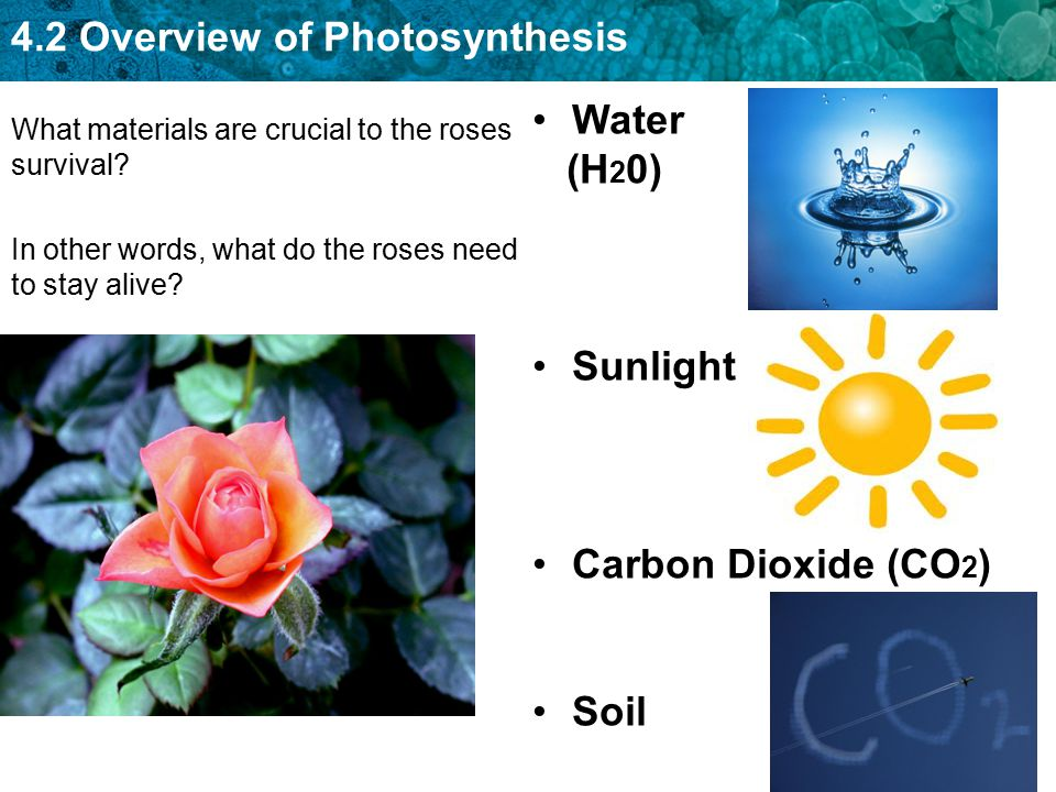 Water (H20) Sunlight Carbon Dioxide (CO2) Soil