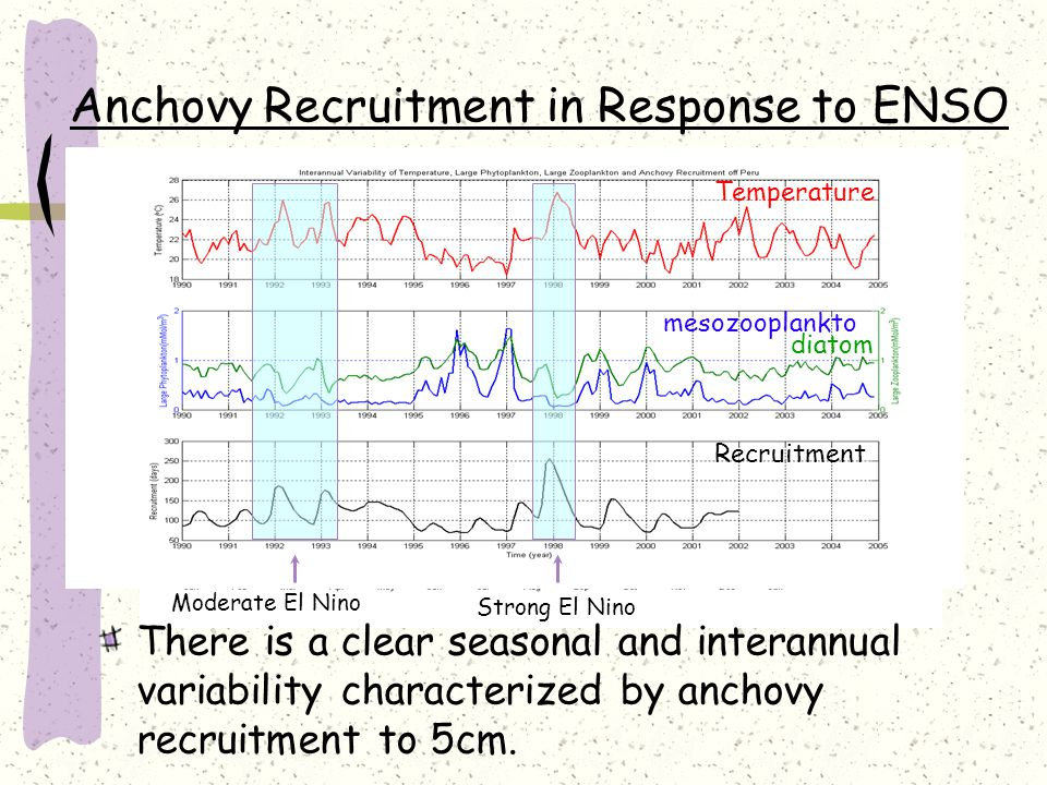 Anchovy Recruitment in Response to ENSO