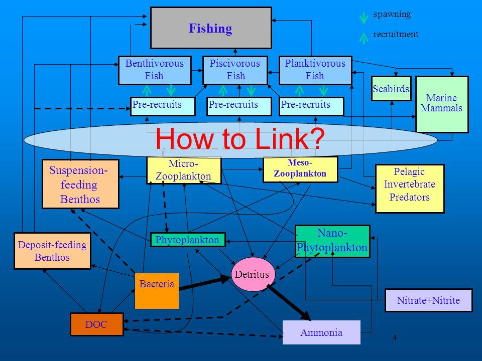 How to Link Fishing Suspension- feeding Nano- Benthivorous Fish