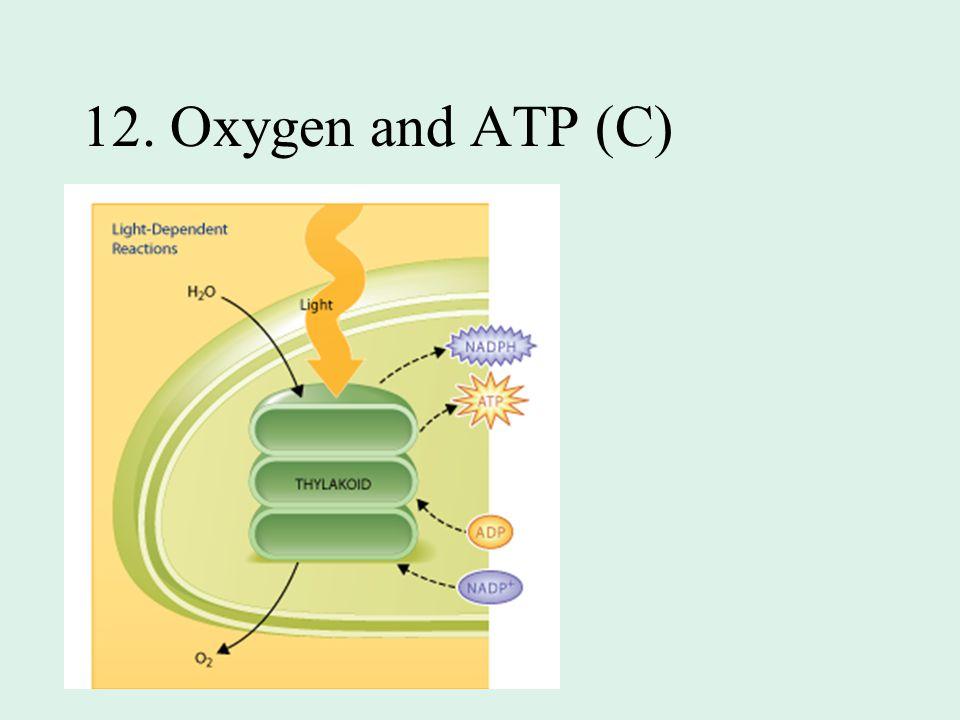 12. Oxygen and ATP (C)
