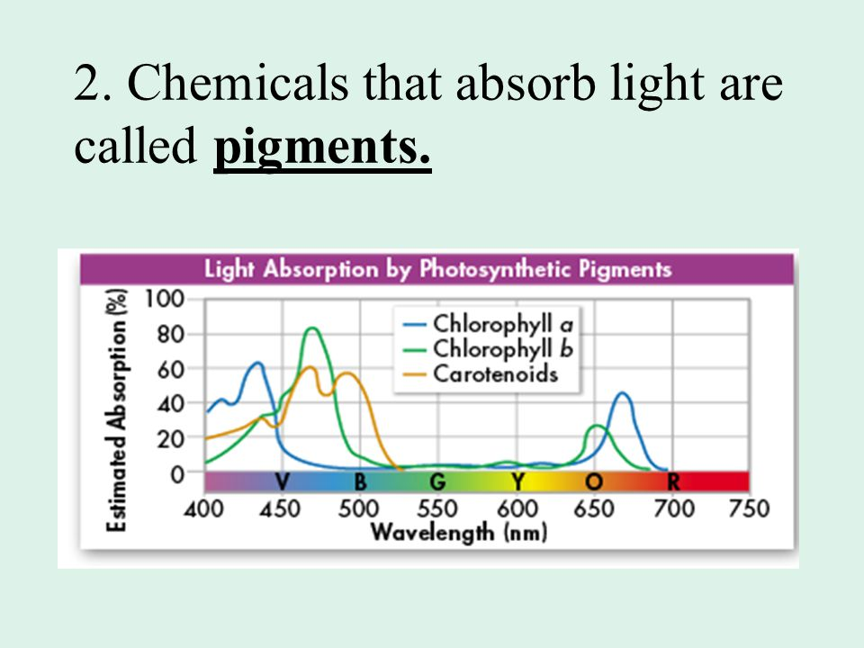 2. Chemicals that absorb light are called pigments.