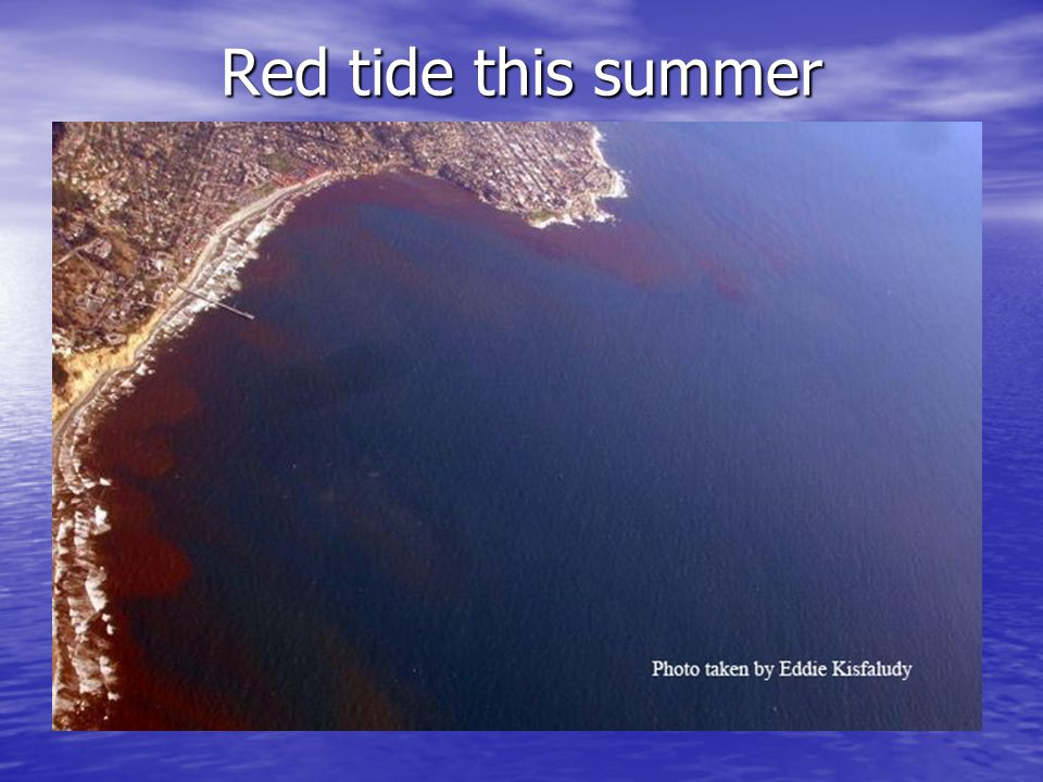 Red tide this summer