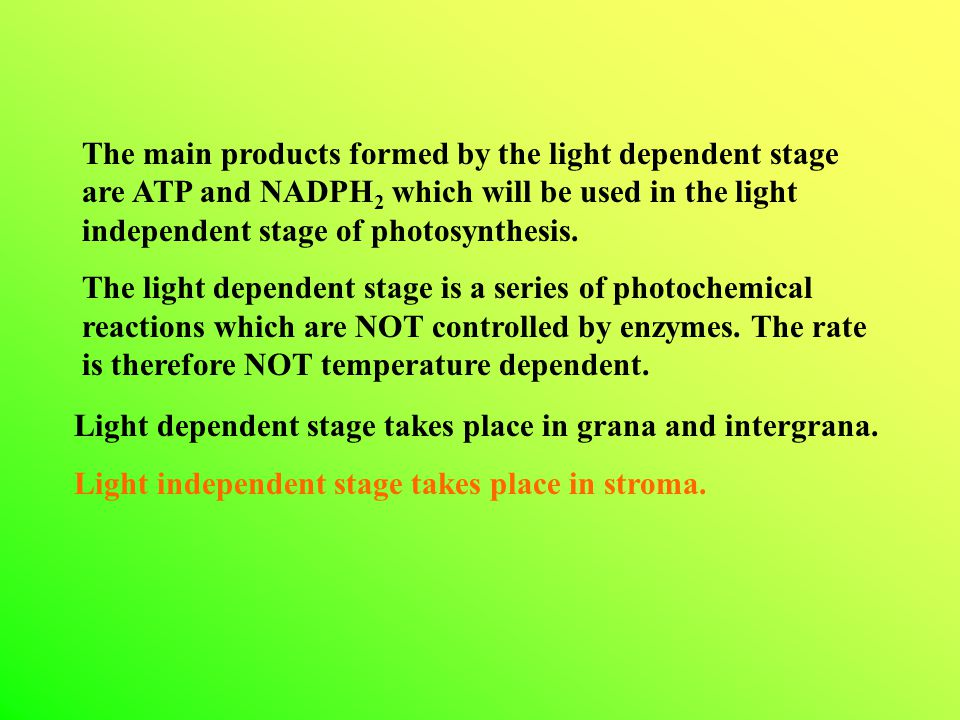 The main products formed by the light dependent stage are ATP and NADPH2 which will be used in the light independent stage of photosynthesis.