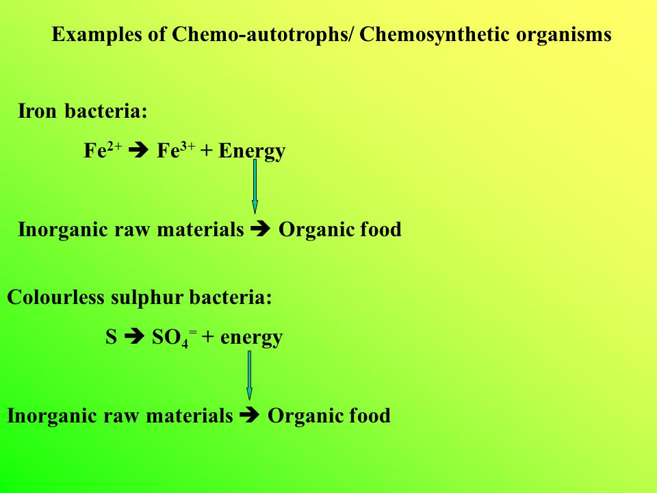 Examples of Chemo-autotrophs/ Chemosynthetic organisms