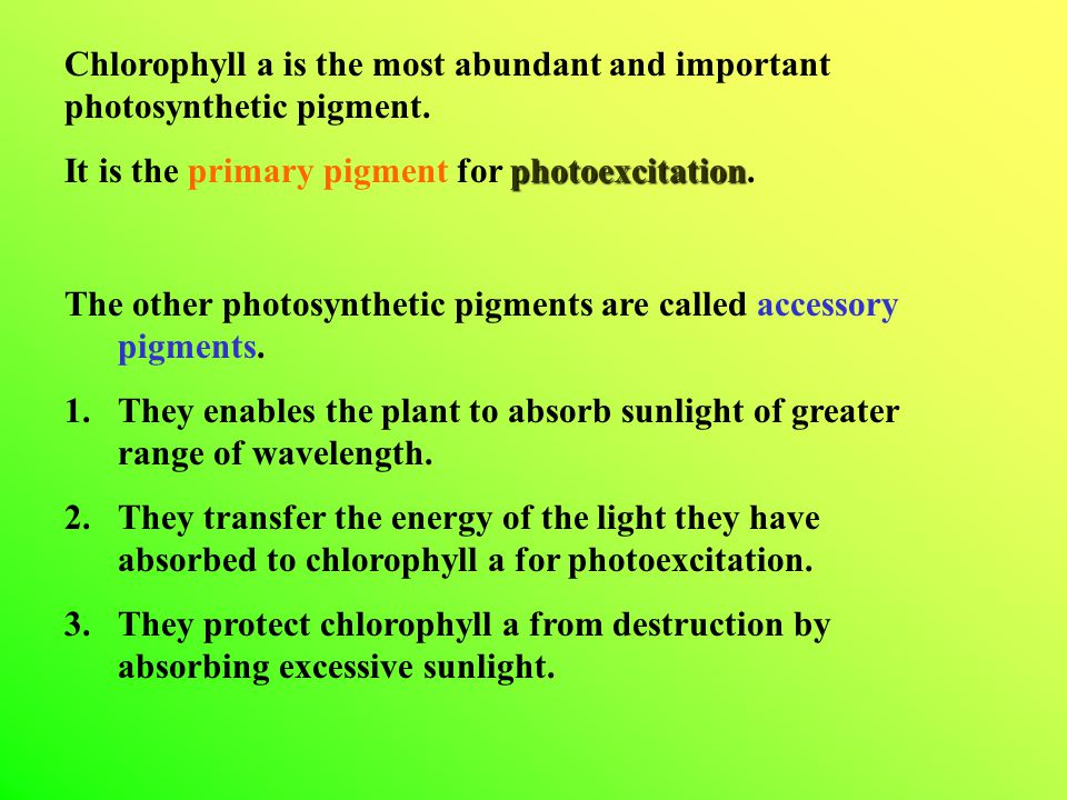 Chlorophyll a is the most abundant and important photosynthetic pigment.