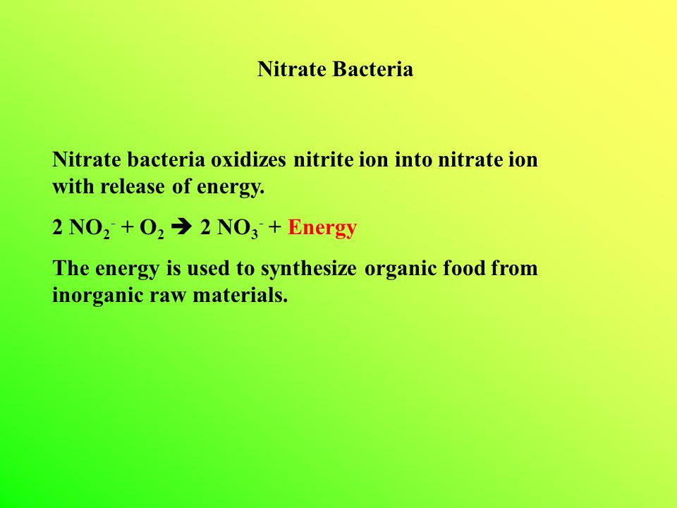 Nitrate Bacteria Nitrate bacteria oxidizes nitrite ion into nitrate ion with release of energy. 2 NO2- + O2  2 NO3- + Energy.