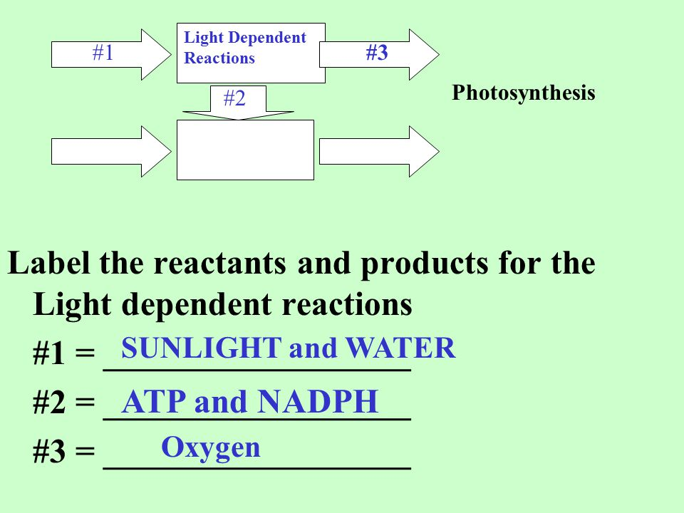 Label the reactants and products for the Light dependent reactions