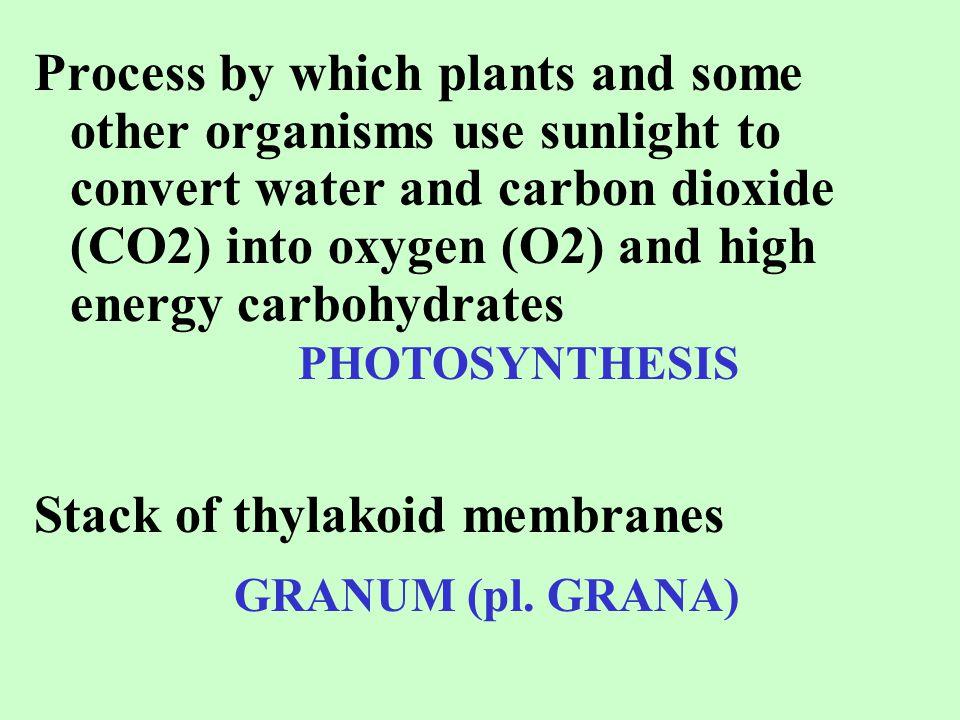 Stack of thylakoid membranes