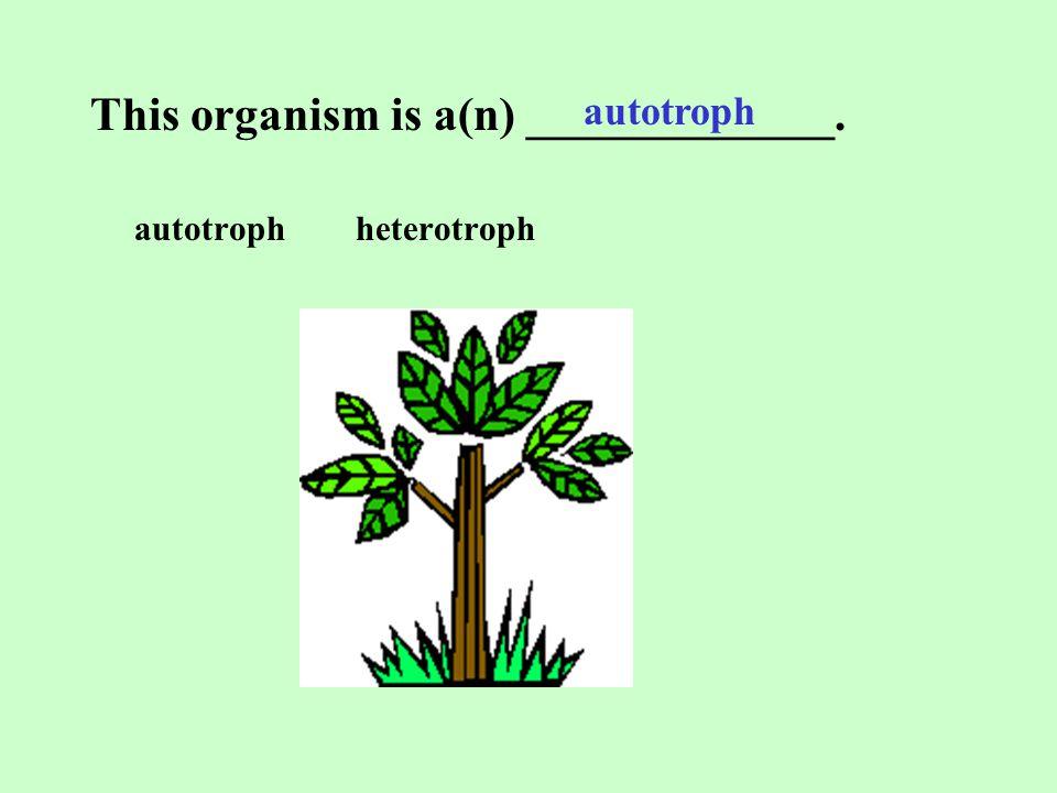 This organism is a(n) _____________.