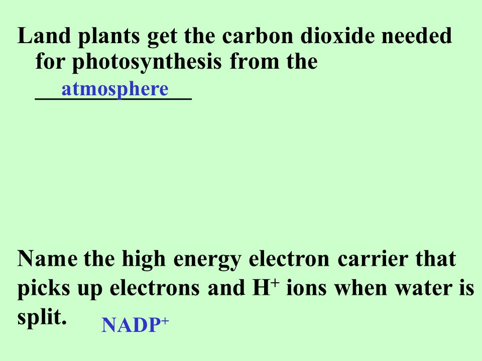 Land plants get the carbon dioxide needed for photosynthesis from the _____________