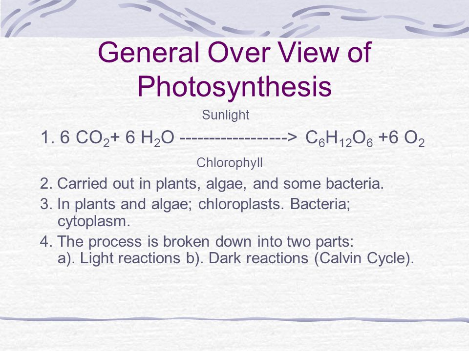 General Over View of Photosynthesis