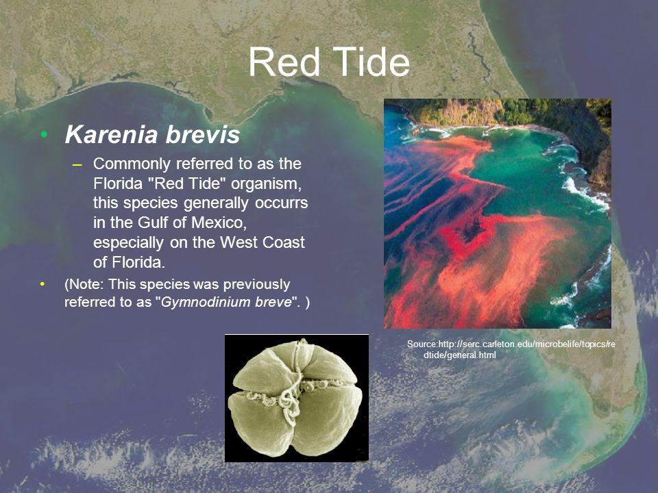 Red Tide Karenia brevis