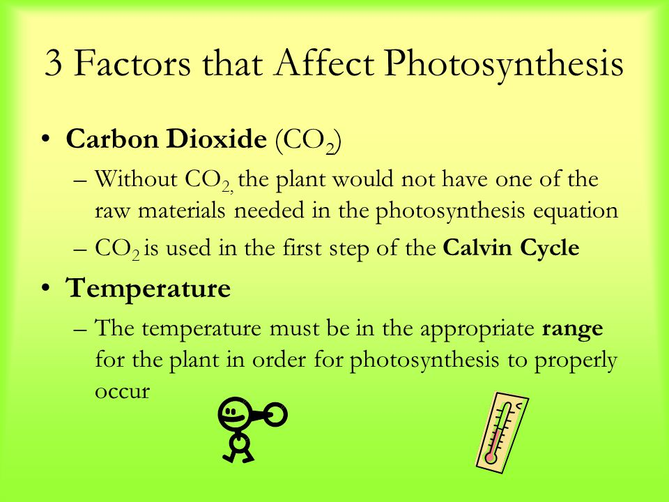 affect photosythesis Abstract photosynthesis in plants is affected by the intensity of the light the plant is exposed to for this experiment, dcpip was added to cuvettes with spinach.