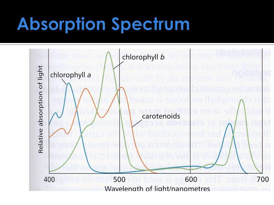Absorption Spectrum