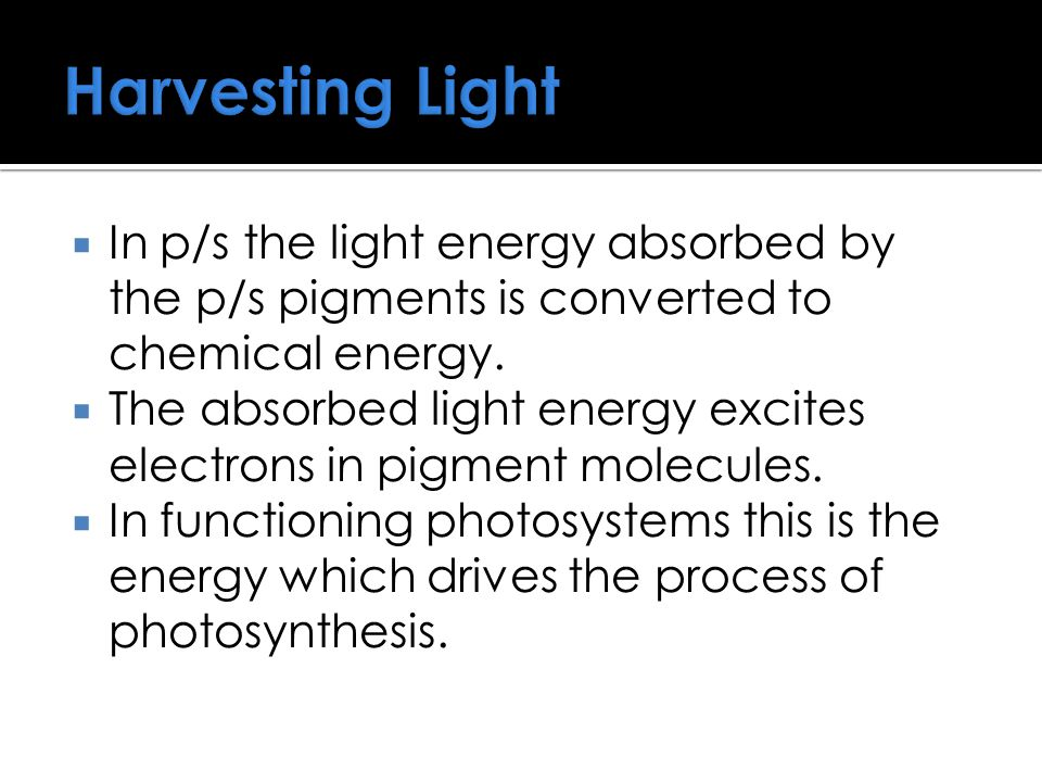 Harvesting Light In p/s the light energy absorbed by the p/s pigments is converted to chemical energy.