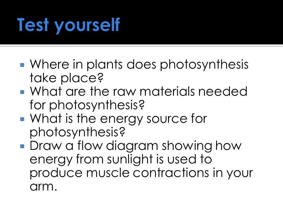 Test yourself Where in plants does photosynthesis take place
