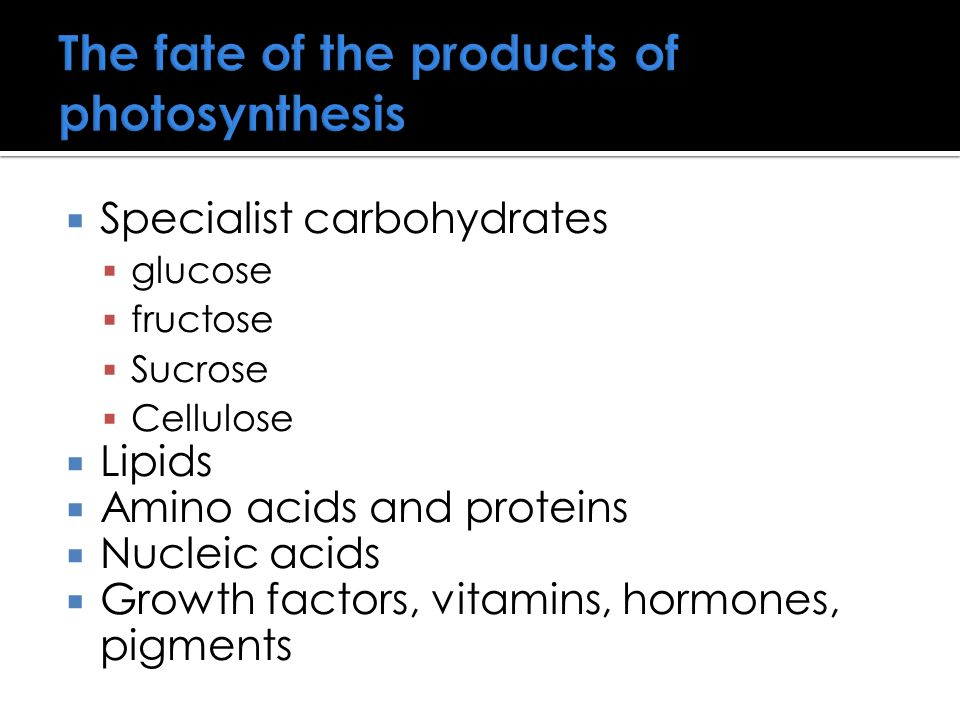 The fate of the products of photosynthesis