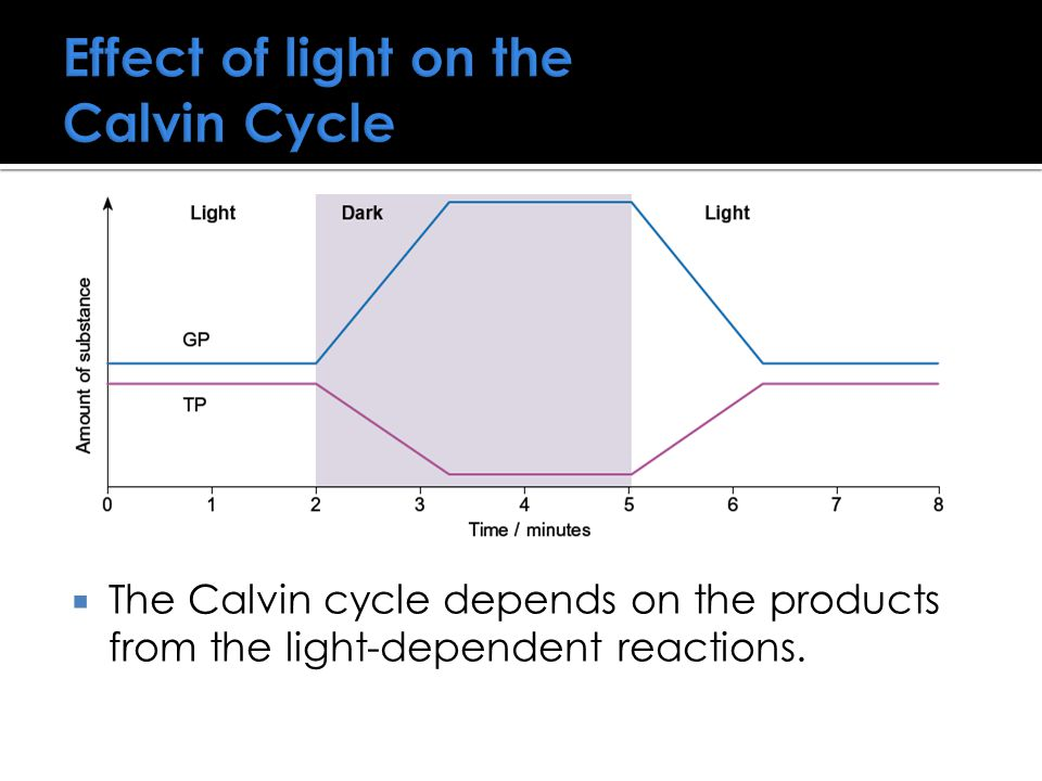 Effect of light on the Calvin Cycle