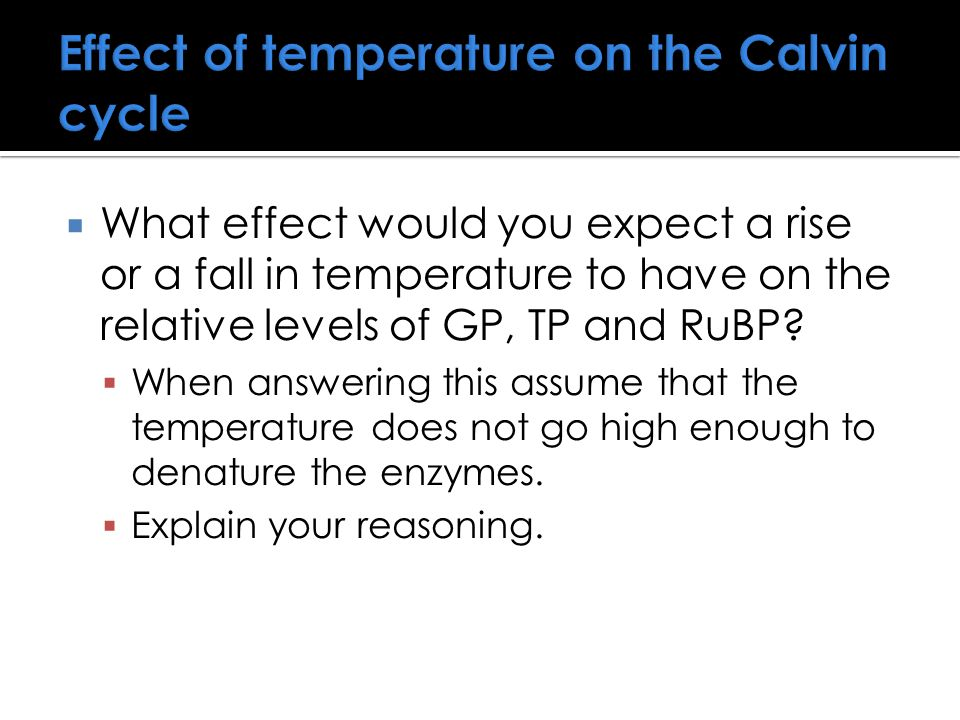 Effect of temperature on the Calvin cycle