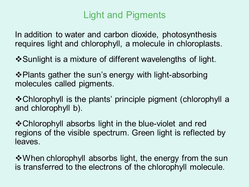 Light and Pigments In addition to water and carbon dioxide, photosynthesis requires light and chlorophyll, a molecule in chloroplasts.