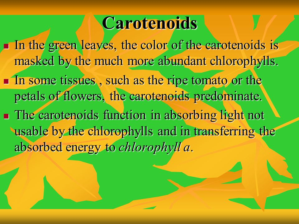 Carotenoids In the green leaves, the color of the carotenoids is masked by the much more abundant chlorophylls.