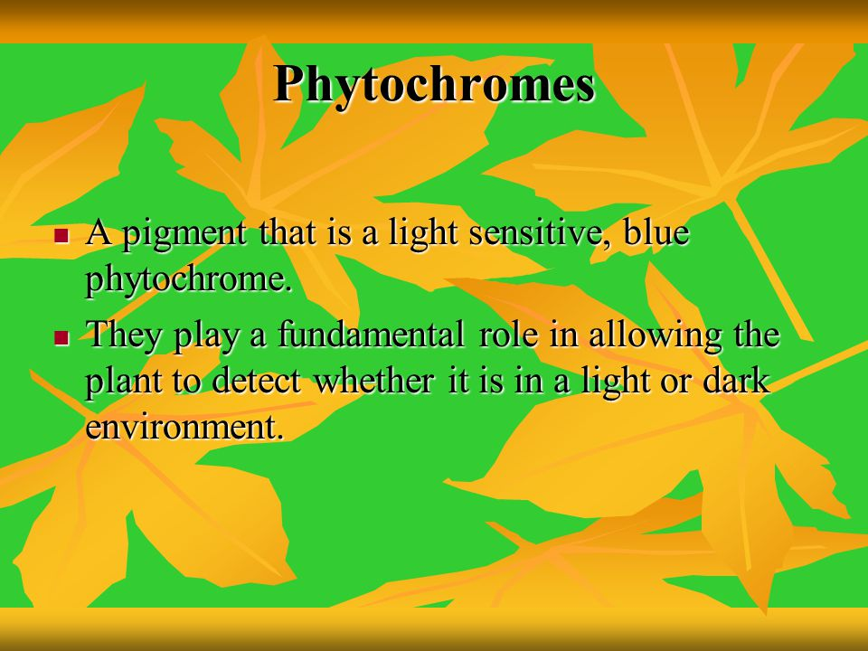 Phytochromes A pigment that is a light sensitive, blue phytochrome.