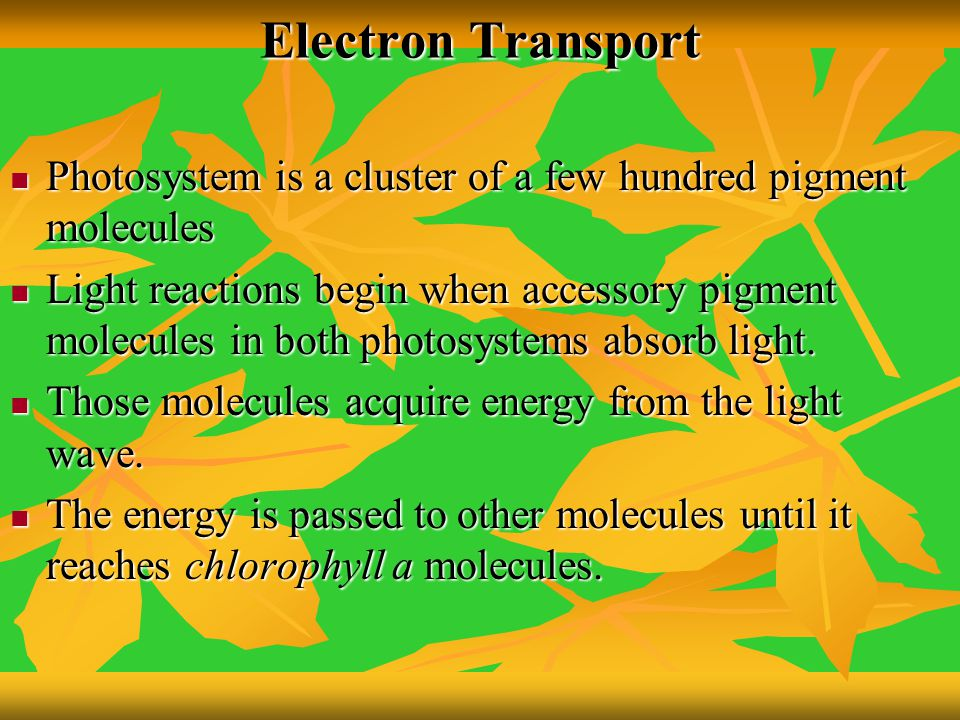 Electron Transport Photosystem is a cluster of a few hundred pigment molecules.