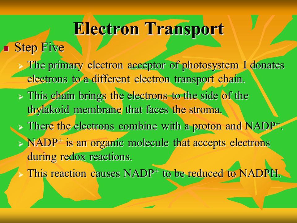 Electron Transport Step Five